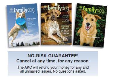 AFC Family Dog